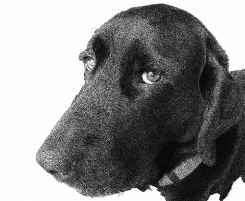 dogging